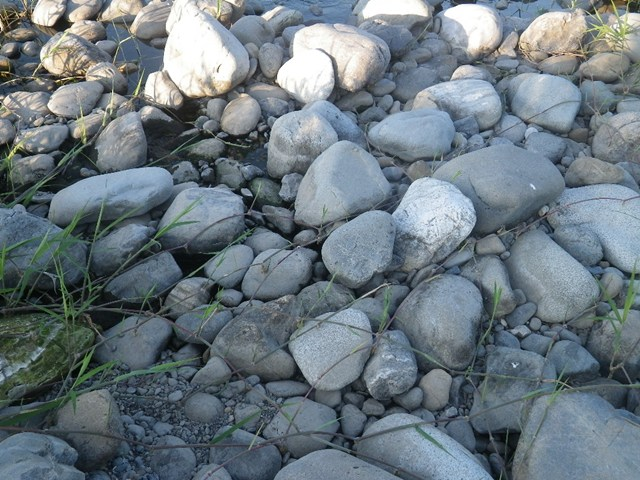 かつてはキシベが優勢だったエリアもツルヨシが進出し、石の下も砂から粒径... 昨日引き出しを開け