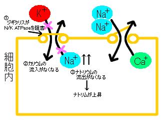 薬物血中濃度測定の重要性 - labo.city.hiroshima ...